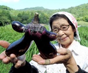 珍野菜珍しい形のなすび